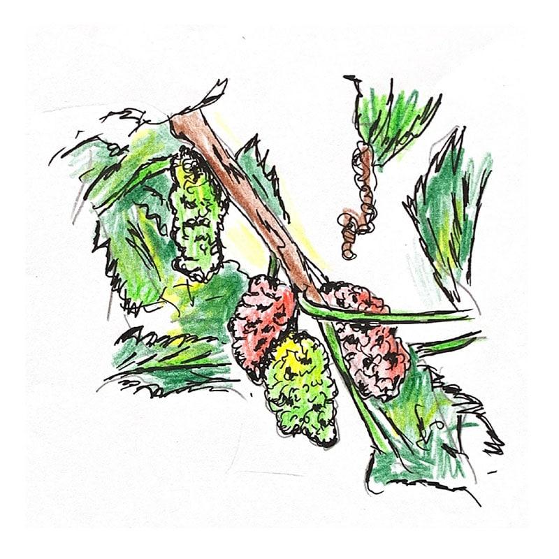 תות עץ טעים ומכתים ת'יידים