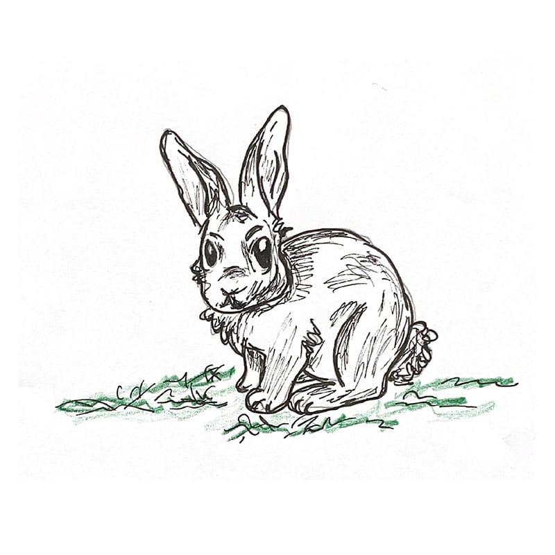 טל על הדשא עוברת ארנבת